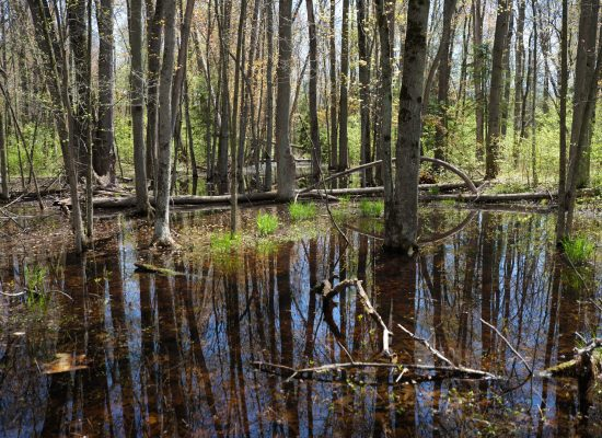 Wooded Wetland / Lot 118